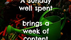 Awsome Sunday quotes that will get you thinking
