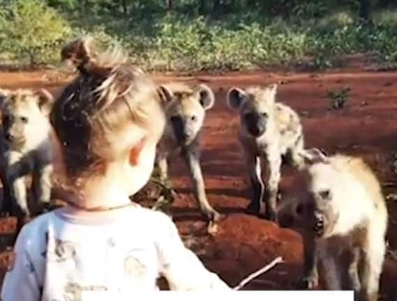 Fisi mpendwa:Toddler recorded on camera spending time with clan of hyenas
