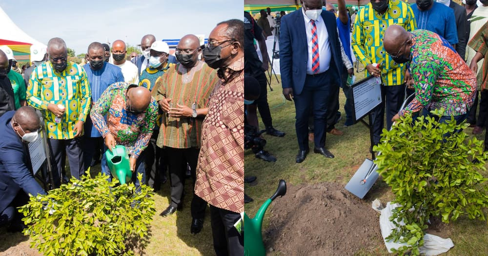 Green Ghana: Tree planting project will not be a one-off event; it will be an annual event - Nana Addo