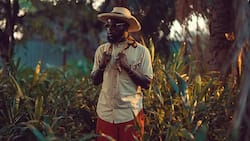 M.anifest - Feels ft. Kwesi Arthur: official video, mp3, lyrics and facts