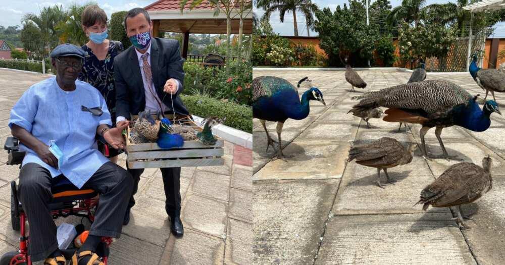Photos drop as Kuffour hosts Australian ambassador; dashes him 2 peacocks from his garden