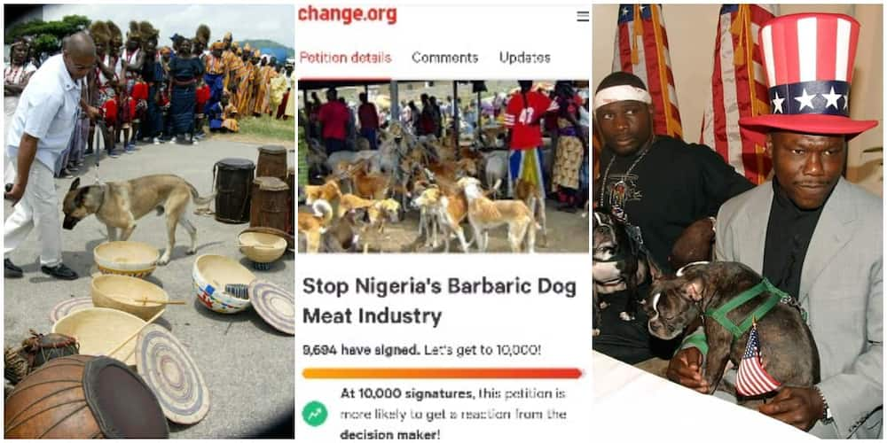 Mixed reactions as over 9000 persons all over the world sign petition to stop eating of dogs in Nigeria