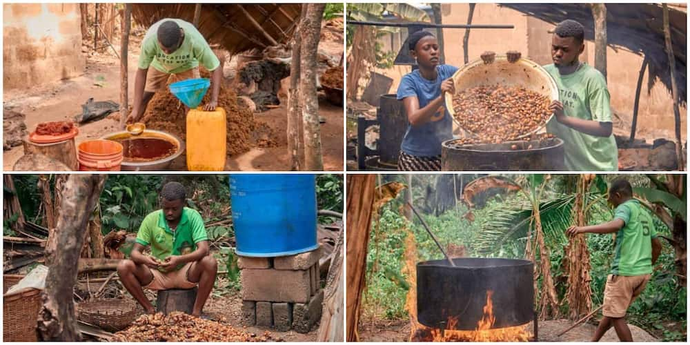 Viral photos of young Nigerian student who makes palm oil as a hustle inspires many people