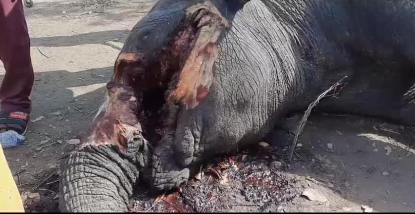 North East Region: Rare elephant killed by faceless assassins amid warning by Paramount Chief