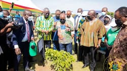 Akufo-Addo's 5-million-trees Green Ghana project will require GH₵125 million - Lands Ministry