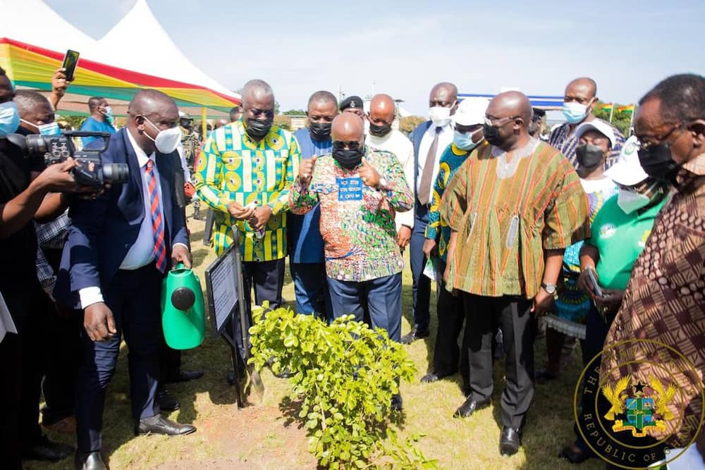 Akufo-Addo's 5 million trees Green Ghana project will require GH₵125 million