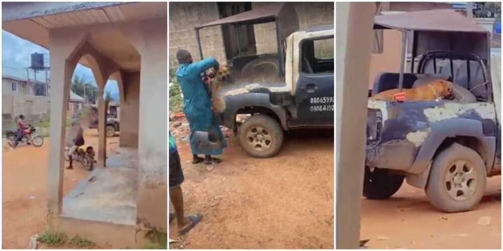 Viral video captures moment Nigerian police arrest dog for biting student's manhood