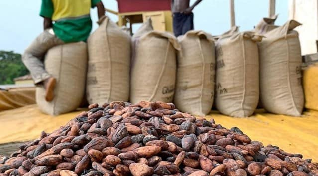 China starting to grow cocoa is a cause for concern - COCOBOD