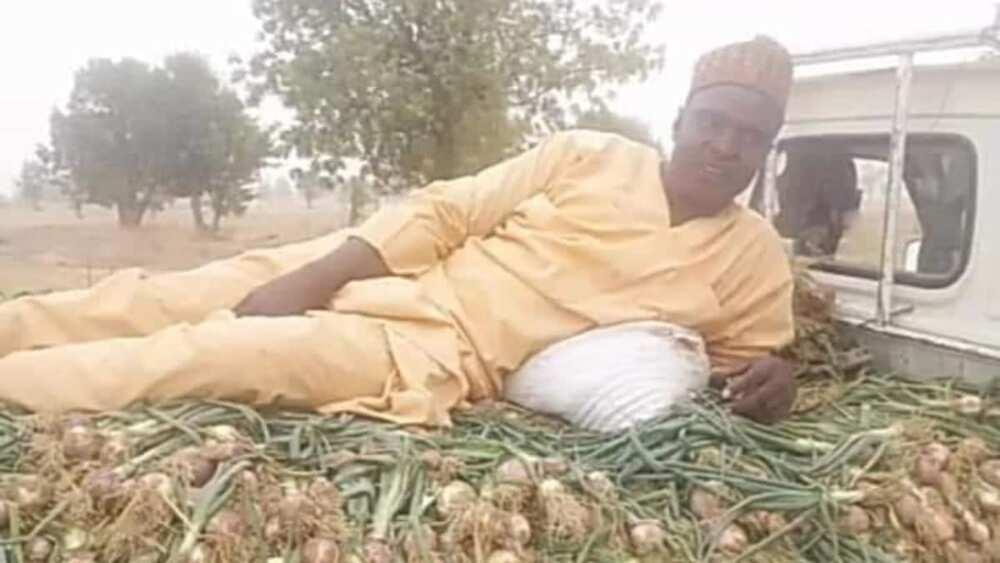 Ibrahim Umara, had a big harvest