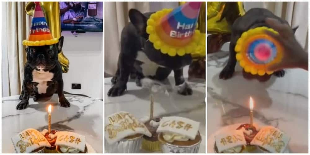 Nigerians react as family celebrate birthday for their dog in new video