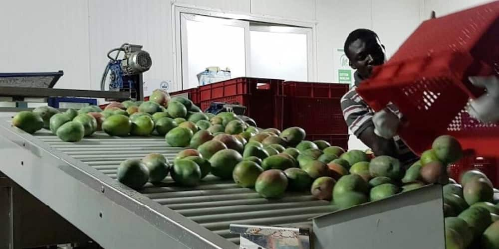 COVID-19: Ghanaian exporters lose $1.6 million as products go waste