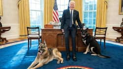 Joe Biden signs privileges for dogs to freely walk into his office, shares adorable photos with animals