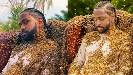 Big Sean: Rapper Covered with 65,000 Bees while Shooting Music Video
