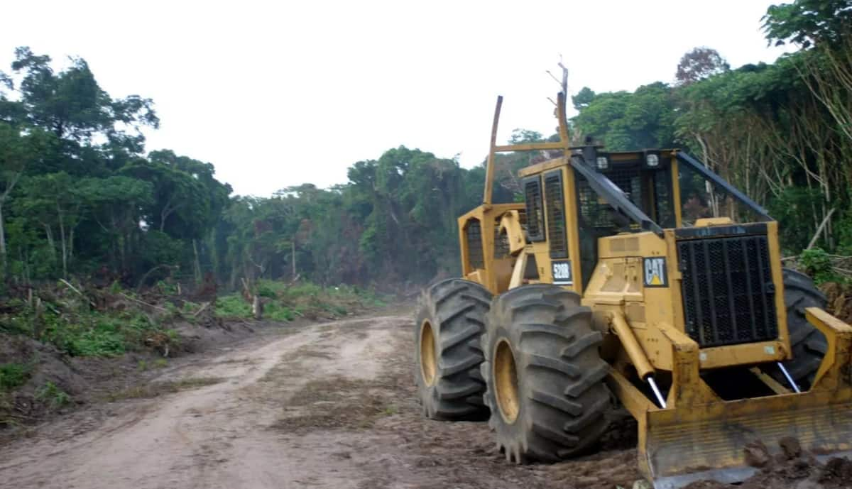 Ghana is losing its rainforest faster than any other country in the world - Global Forest Watch