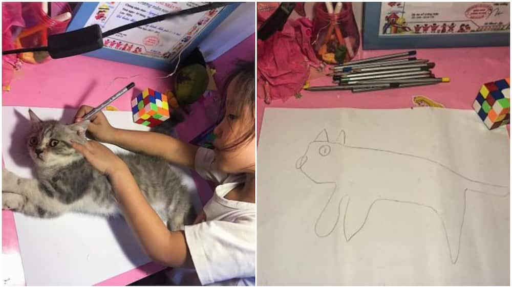 Funny photos of kid who used live cat to make sketch go viral, many 'praised' her act