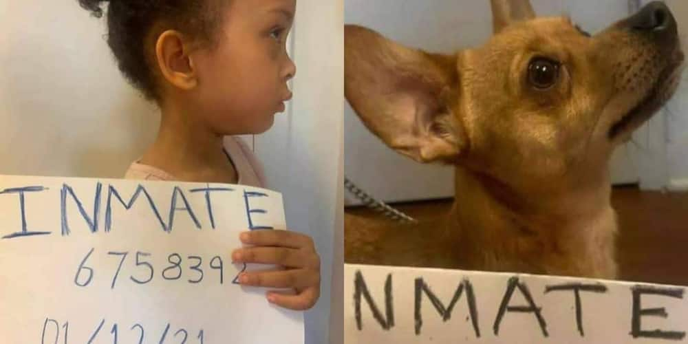 Parents Make Mischievous Kid & Dog Take Mugshots, the Results Are Hilarious