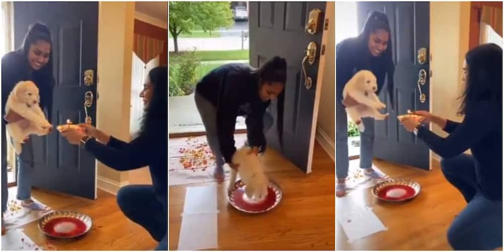 My new favorite thing is desi families welcoming their new puppies with traditional ceremonies