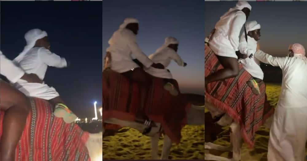 I want to get down - 'Fearo' Shatta Bandle screams as he goes on camel ride in Dubai (video)