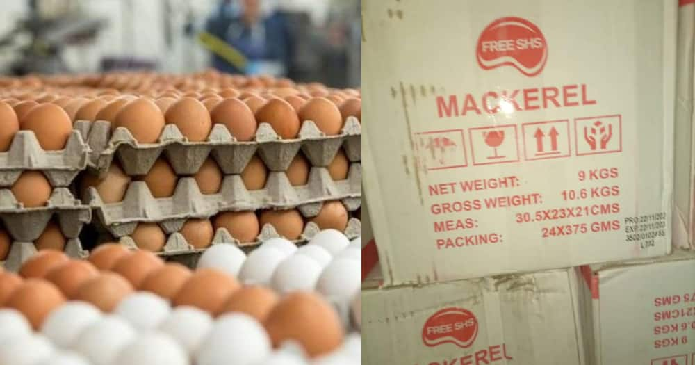 Poultry farmers in trouble as gov't opts for Chinese mackerel for Free SHS students instead of eggs