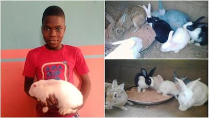 Meet 12-year-old boy who nurtured and raised 2 rabbits, he has 26 now and plans to expand the business (photos)